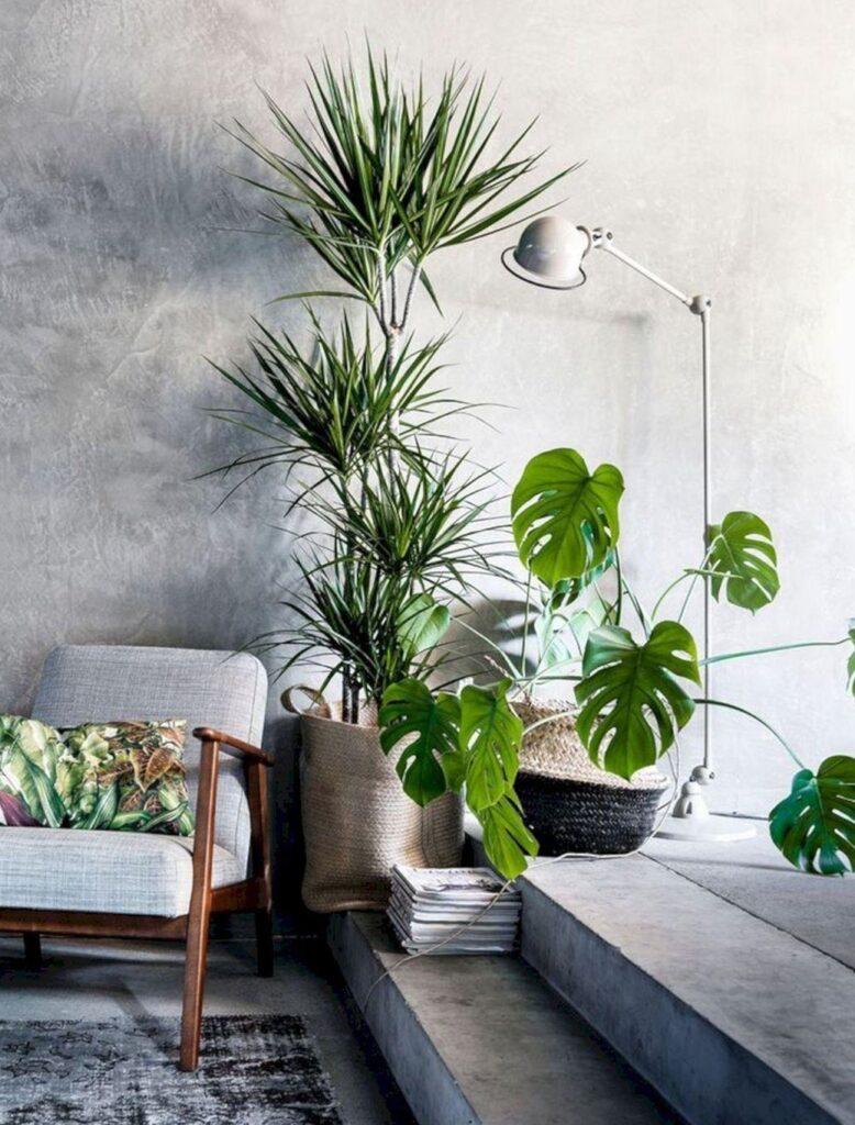 bitki kullanımı