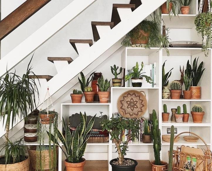 merdiven altı bitki
